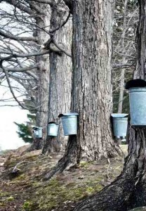 Tribe sees syrup as way out of poverty. Photo credit: goodnewsnetwork.org